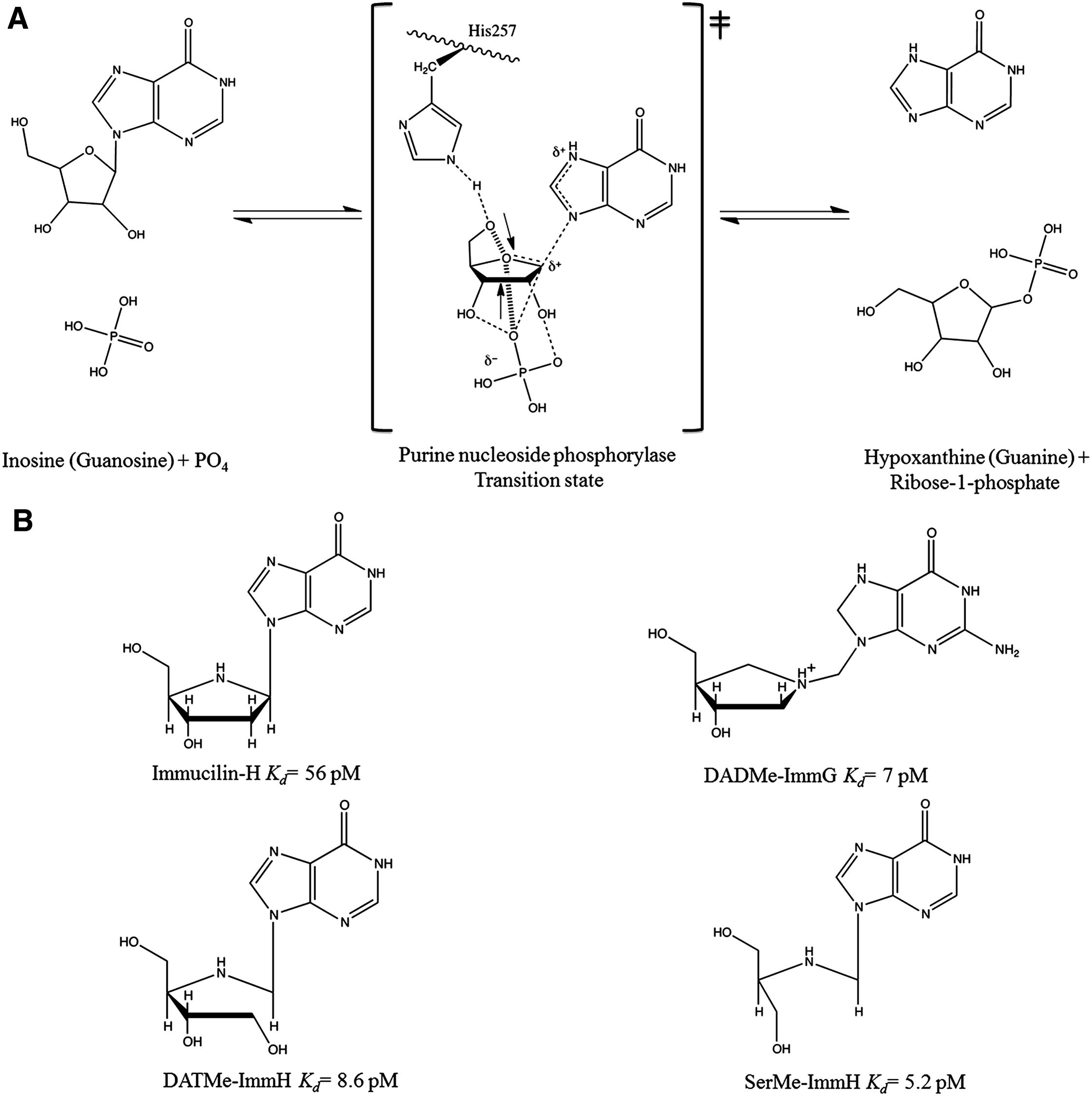 Catalytic Site Conformations In Human Pnp By 19f Nmr And