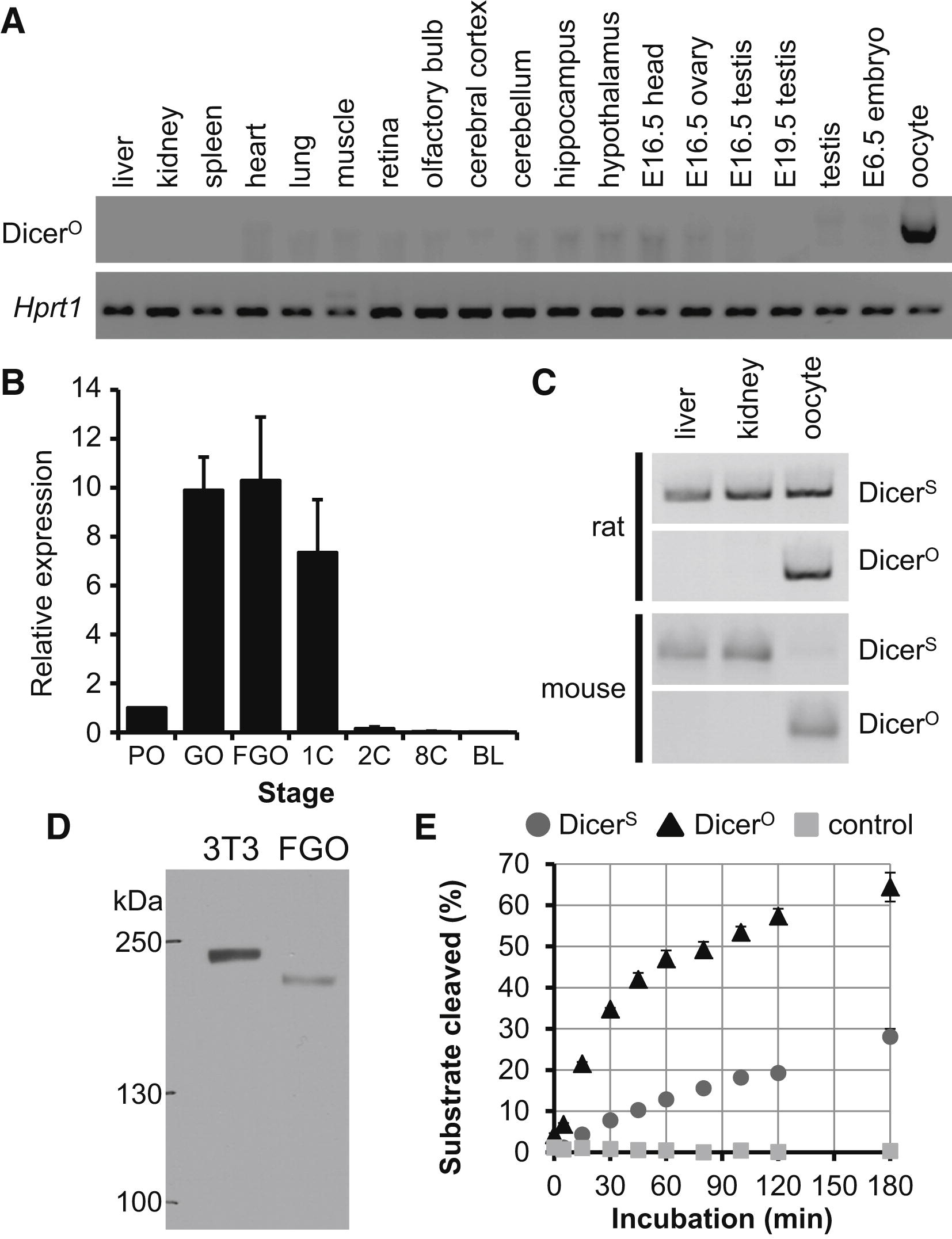 A Retrotransposon Driven Dicer Isoform Directs Endogenous Small Interfering Rna Production In