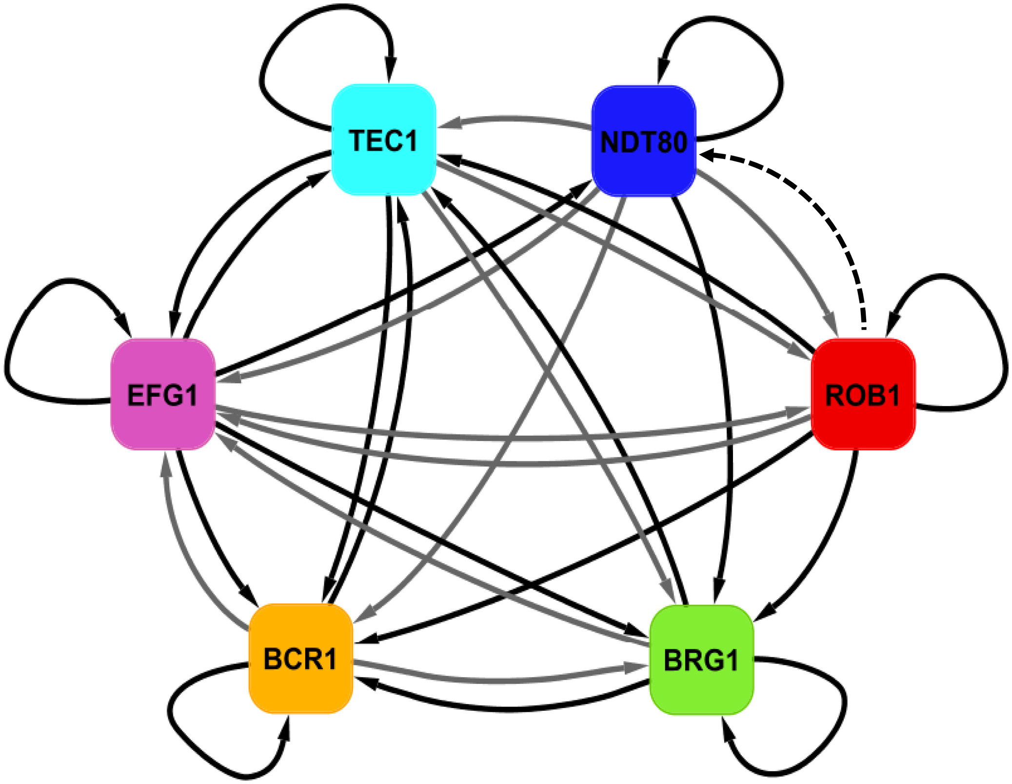 A Recently Evolved Transcriptional Network Controls Biofilm Development In Candida Albicans Cell