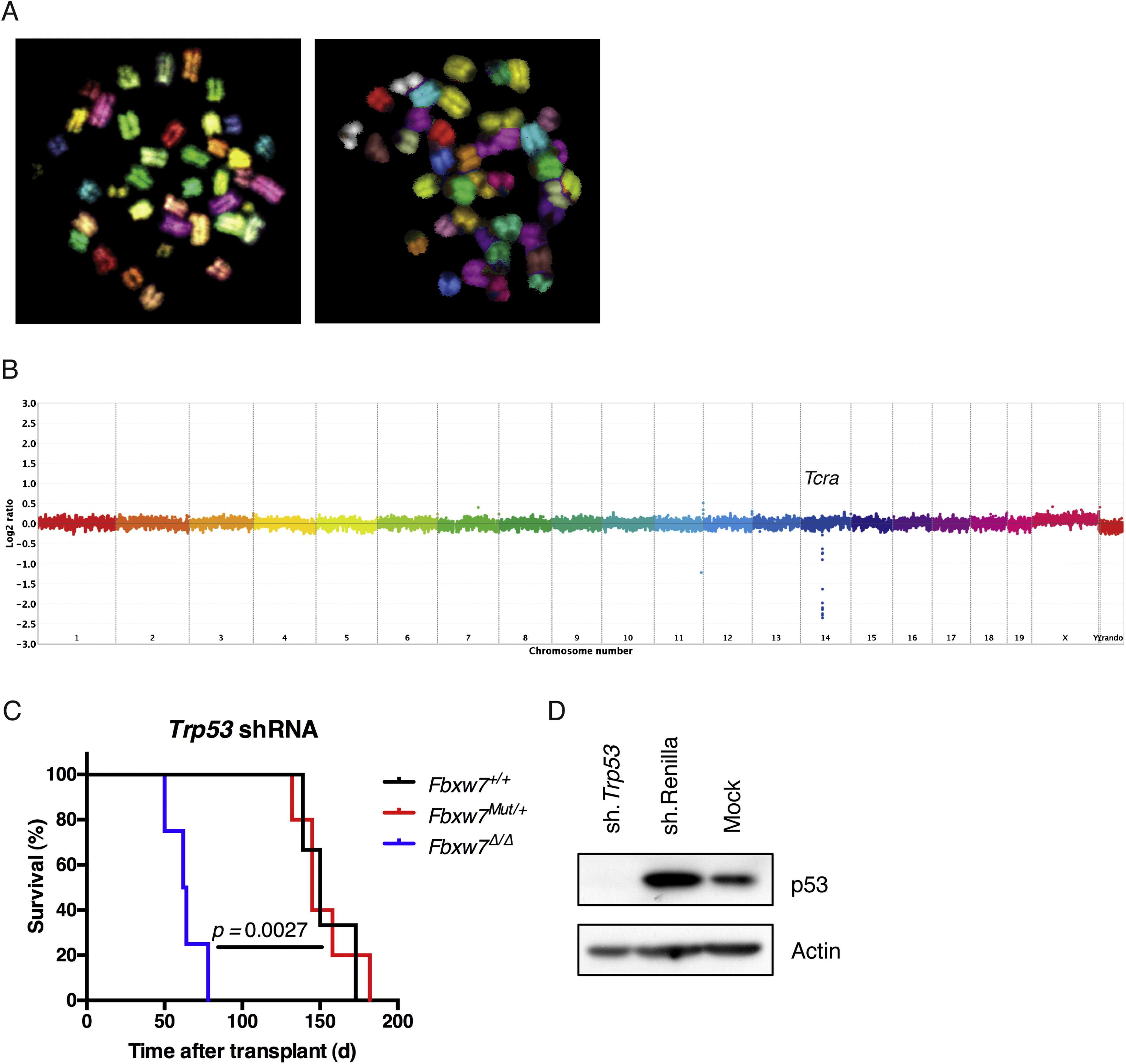 The Ubiquitin Ligase Fbxw7 Modulates Leukemia Initiating Cell Activity By Regulating Myc