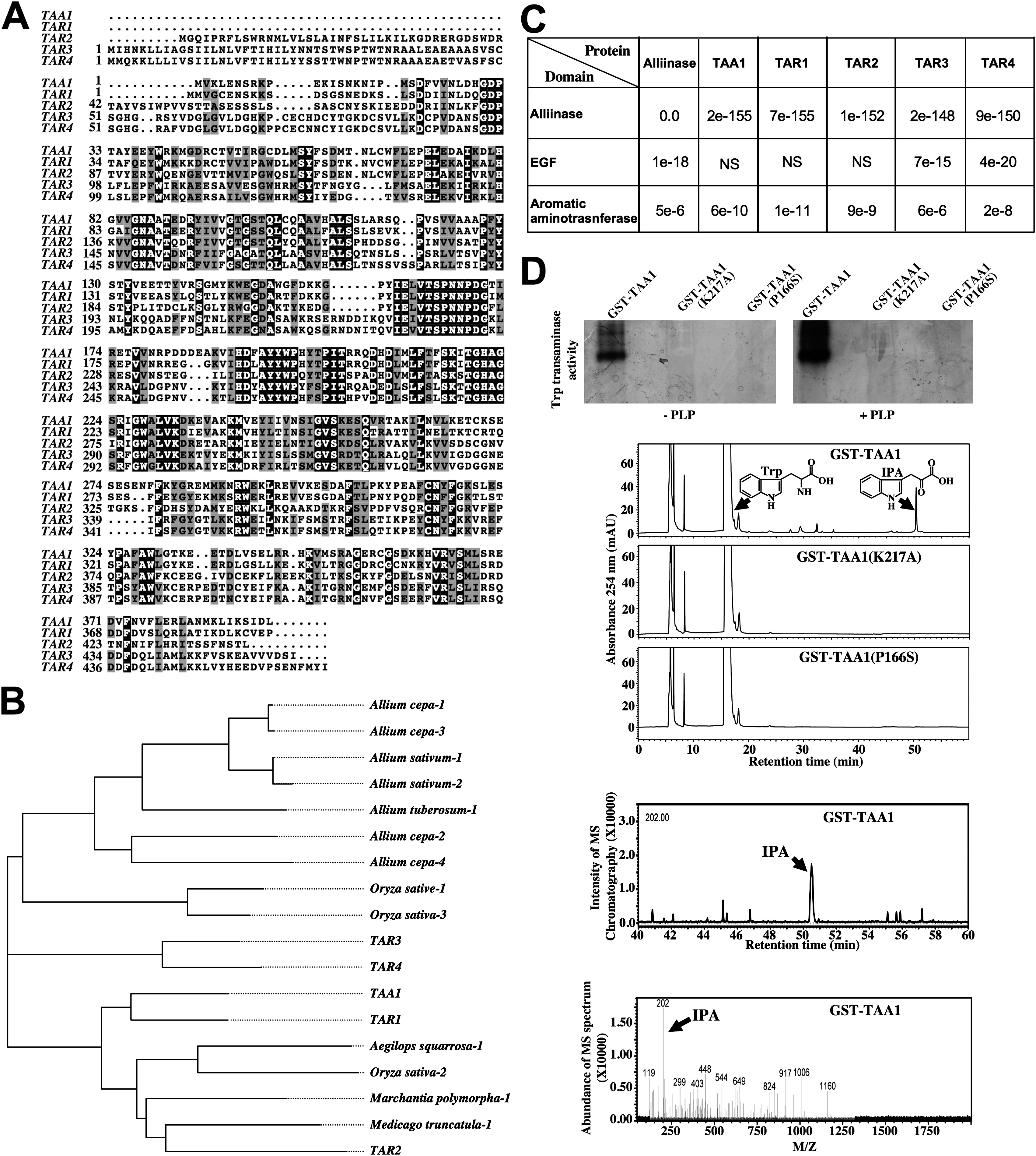 Taa1 Mediated Auxin Biosynthesis Is Essential For Hormone Crosstalk And Plant Development Cell
