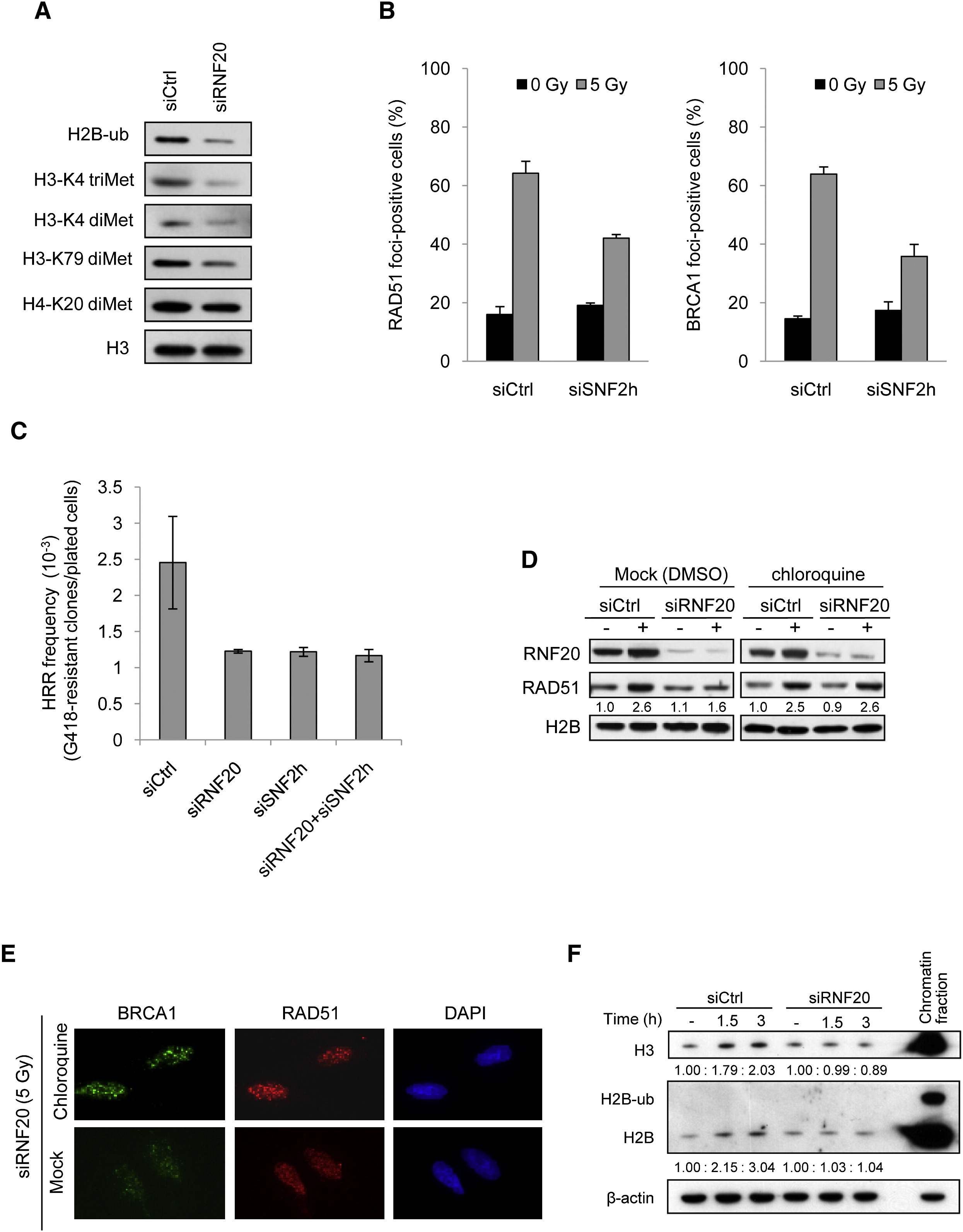 Regulation Of Homologous Recombination By Rnf20 Dependent H2b Ubiquitination Molecular Cell