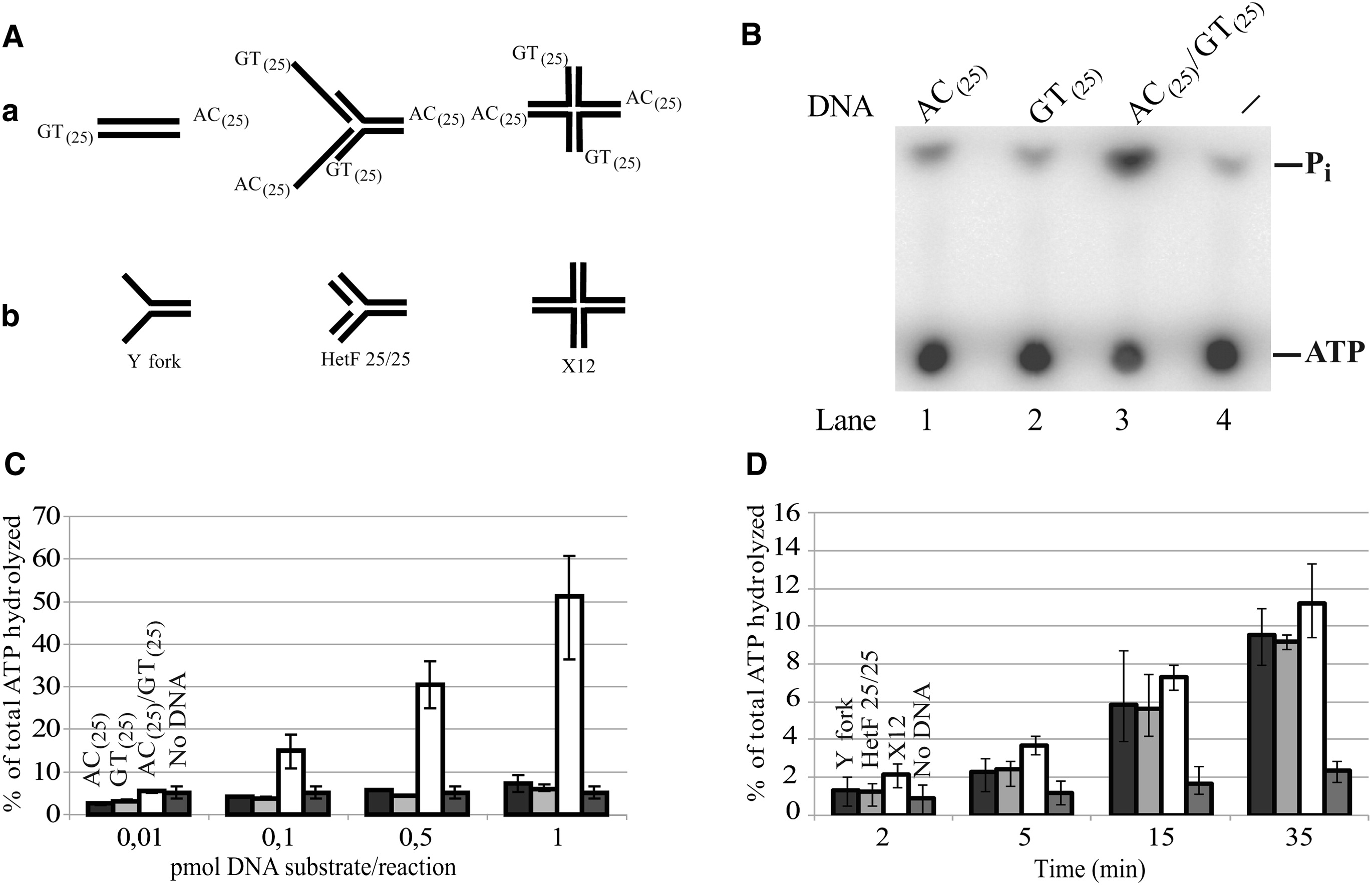Yeast Rad5 Protein Required For Postreplication Repair Has A Dna Helicase Activity Specific For