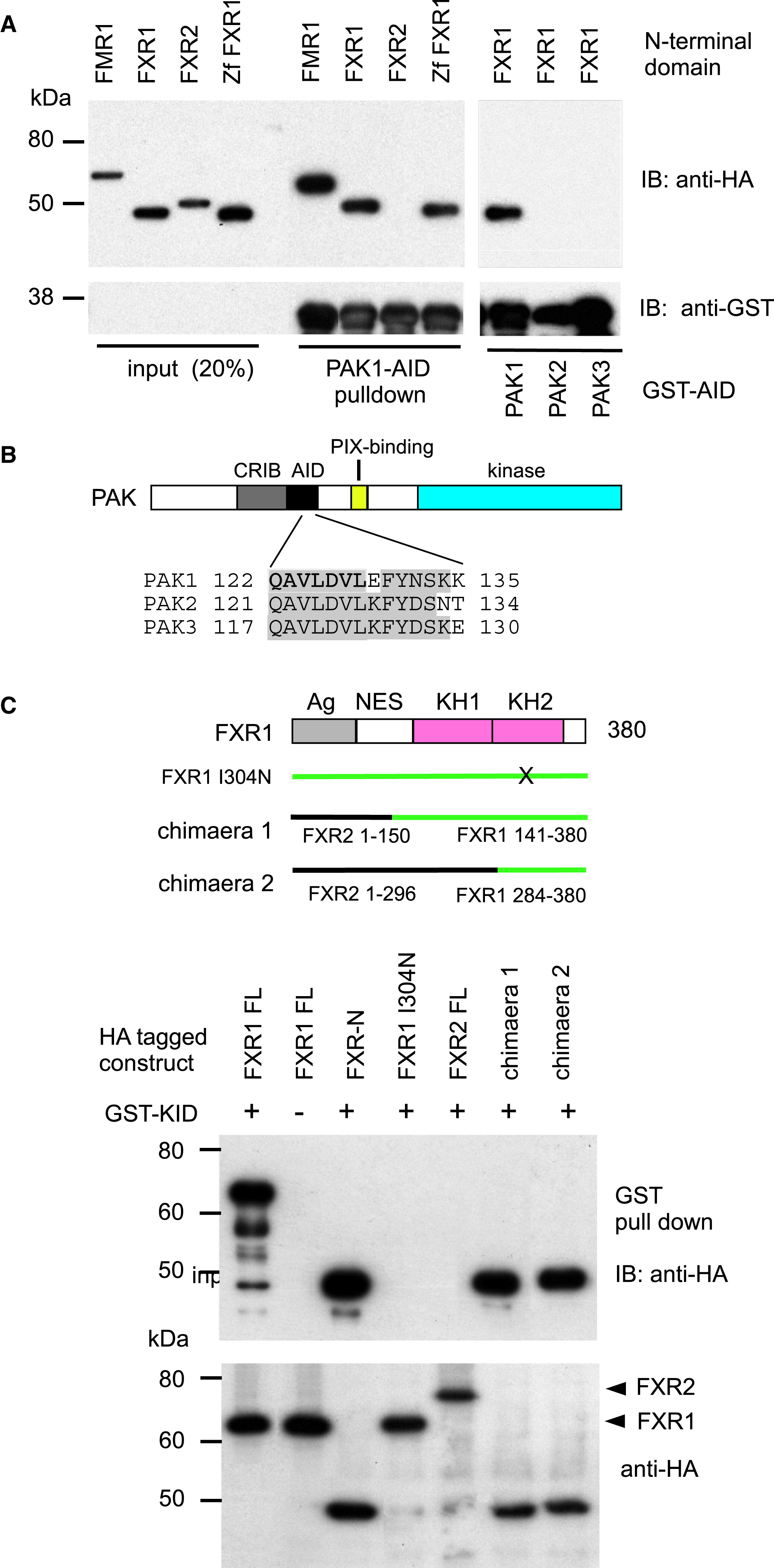 A Functional Requirement For Pak1 Binding To The Kh 2