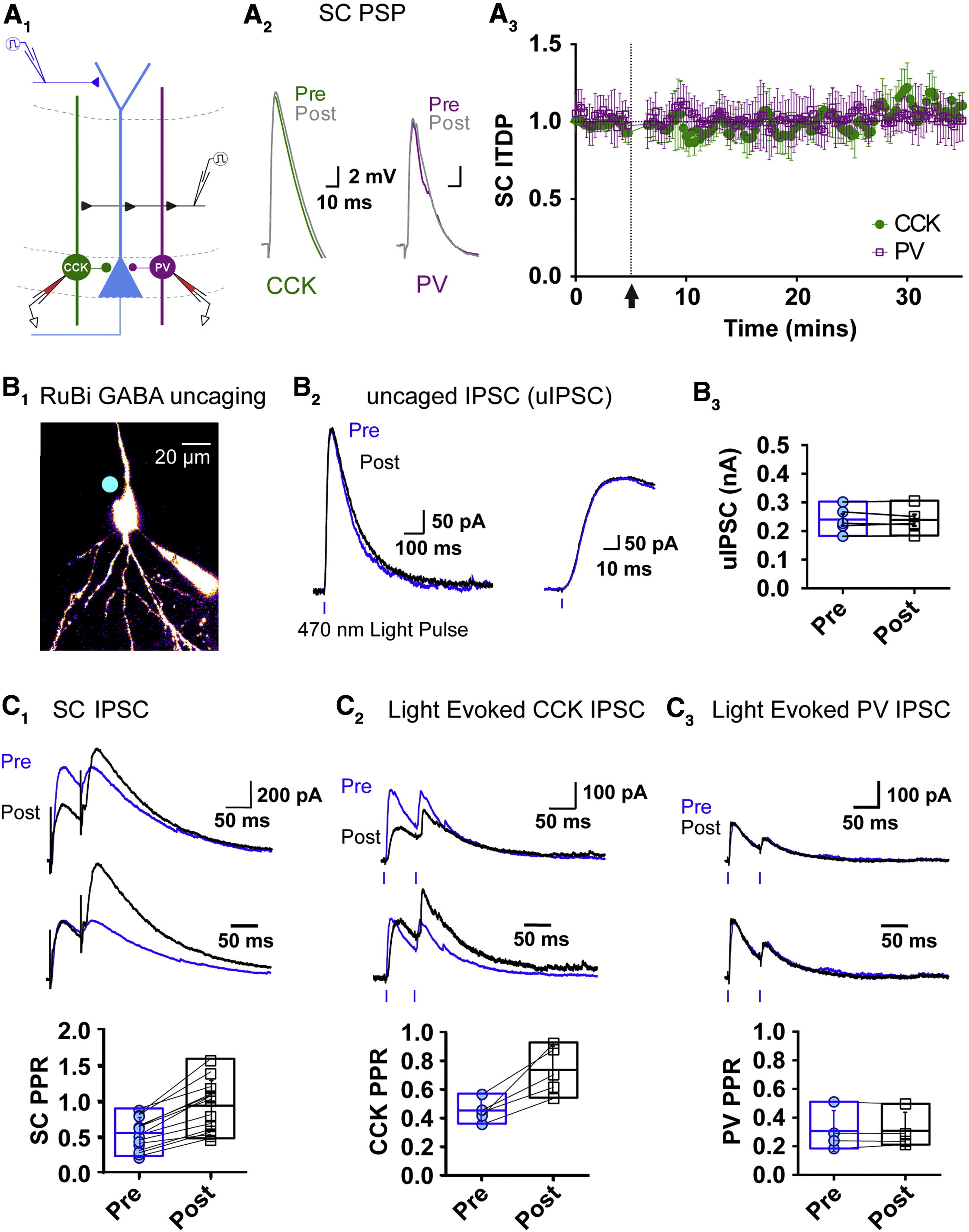 A Cortico Hippocampal Learning Rule Shapes Inhibitory Microcircuit Activity To Enhance