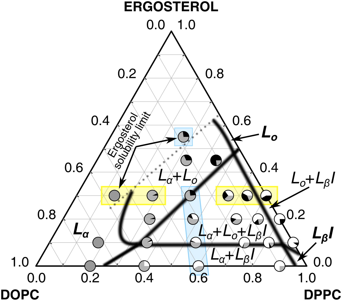 Role Of Unsaturated Lipid And Ergosterol In Ethanol
