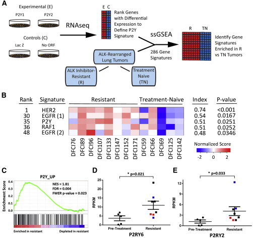 A Functional Landscape of Resistance to ALK Inhibition in ...