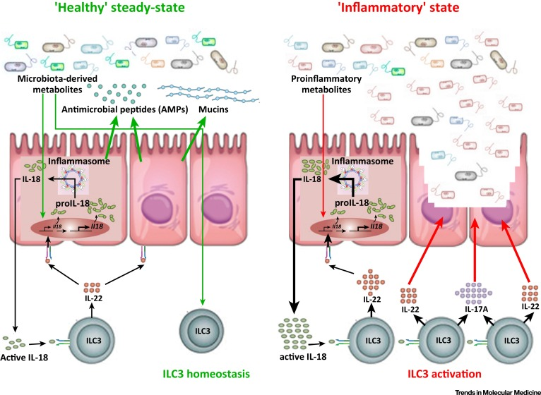 Image result for inflammasome dysbiosis