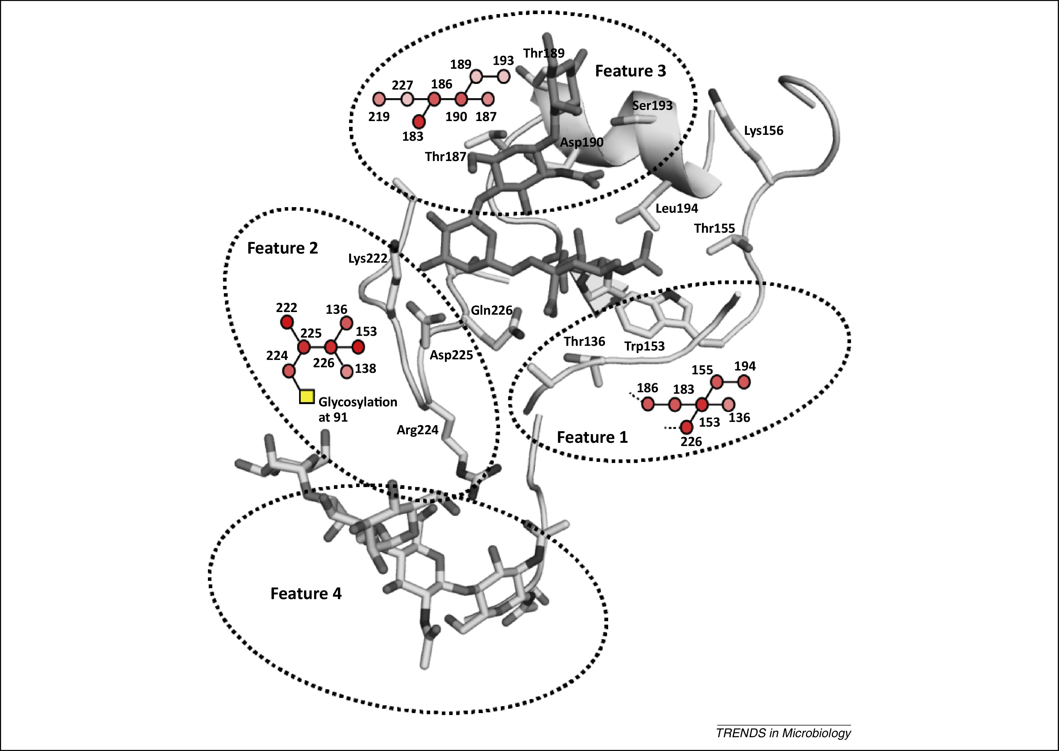 Glycan Receptor Specificity As A Useful Tool For Characterization And Surveillance Of Influenza