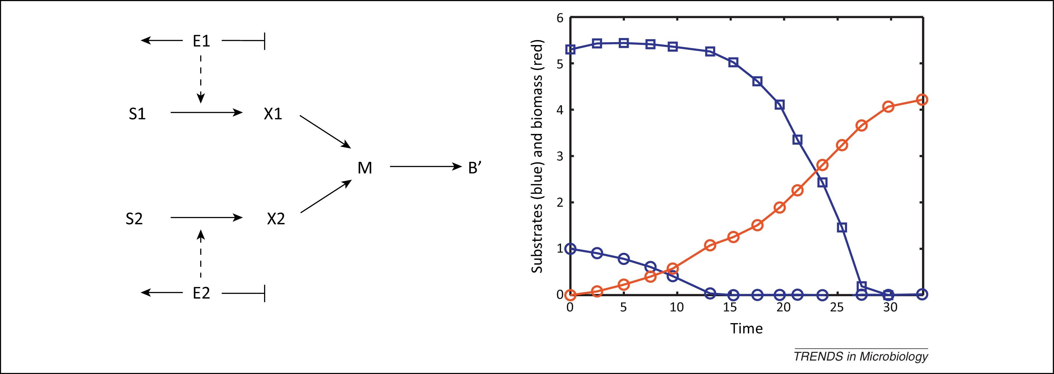 Understanding Carbon Catabolite Repression In Escherichia