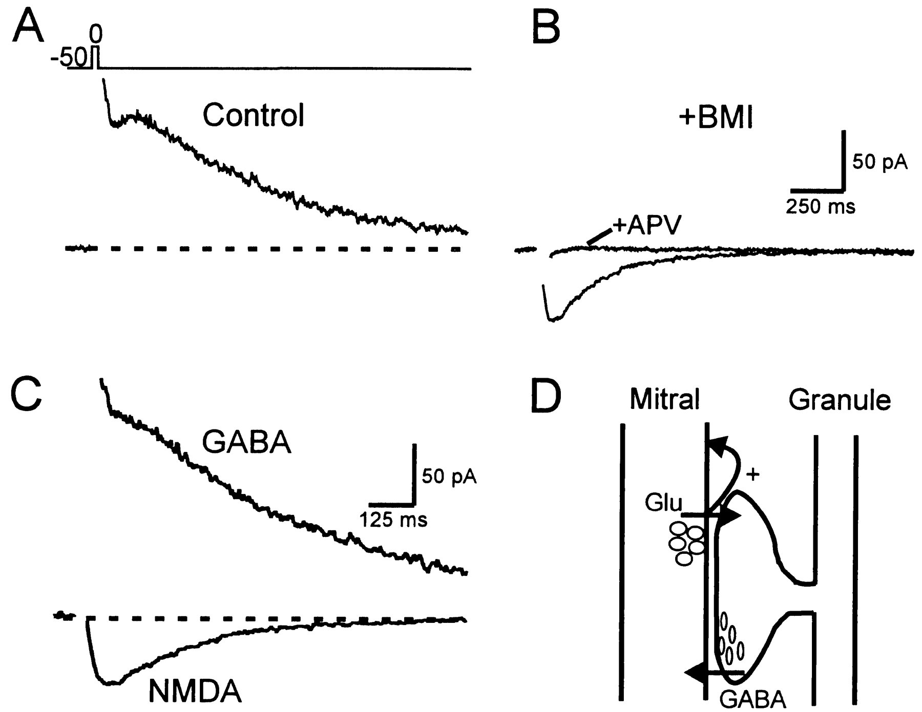 Glutamate Spillover Mediates Excitatory Transmission In