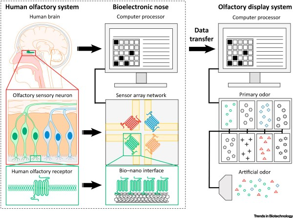 Bioelectronic Nose: An Emerging Tool for Odor ...