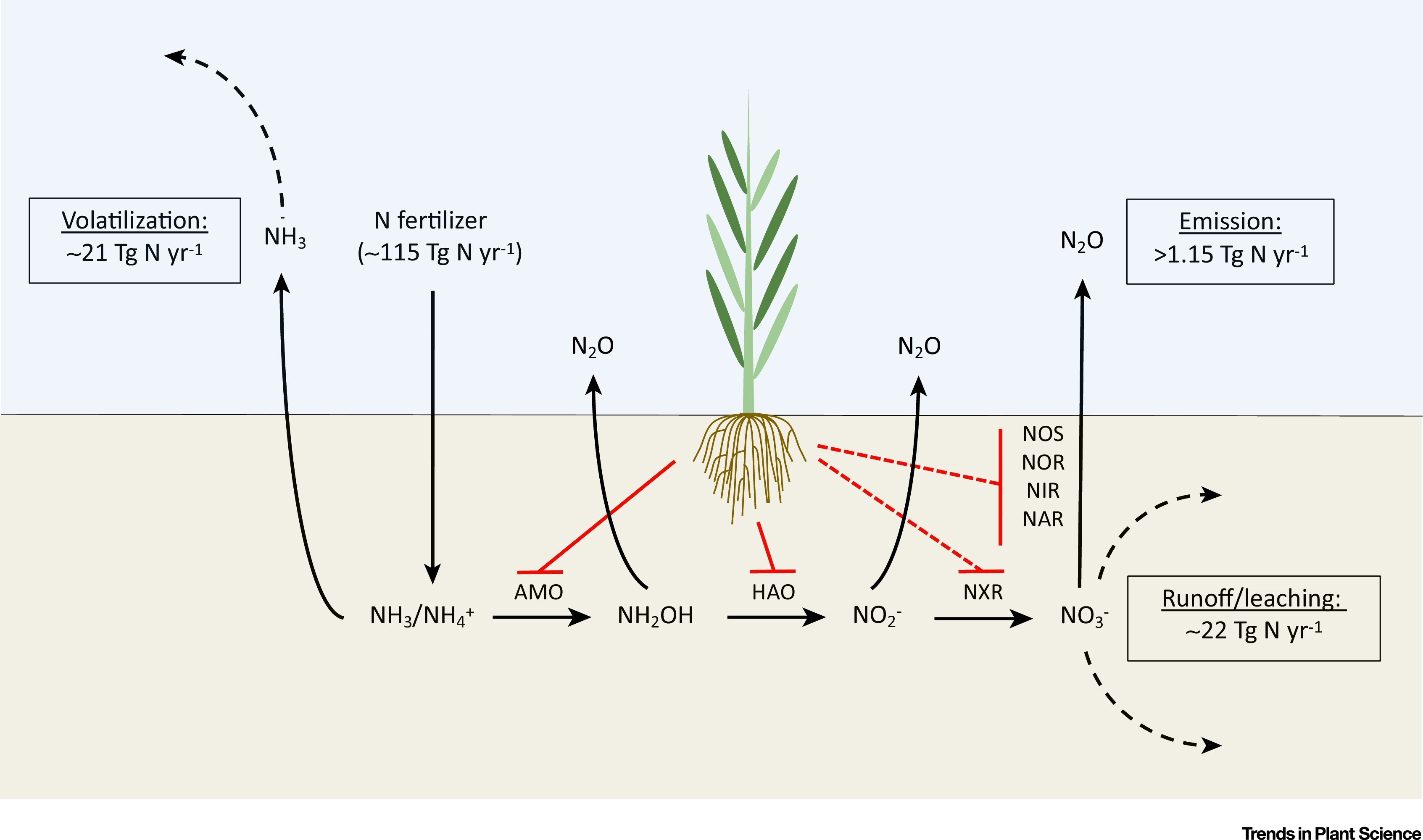How Plant Root Exudates Shape The Nitrogen Cycle Trends