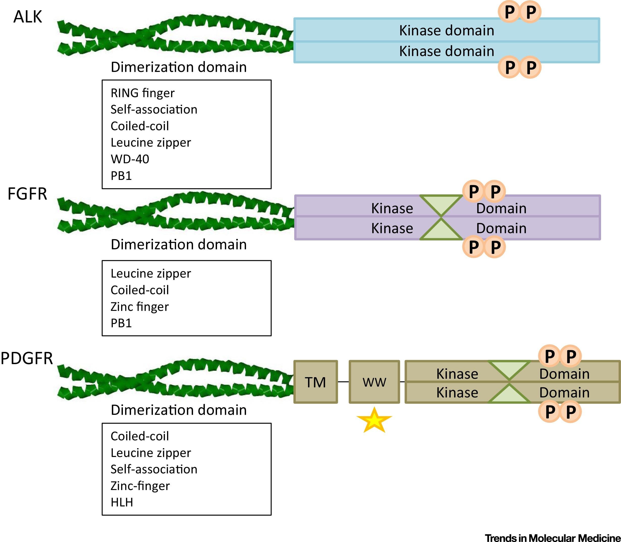 Receptor Tyrosine Kinases Translocation Partners In