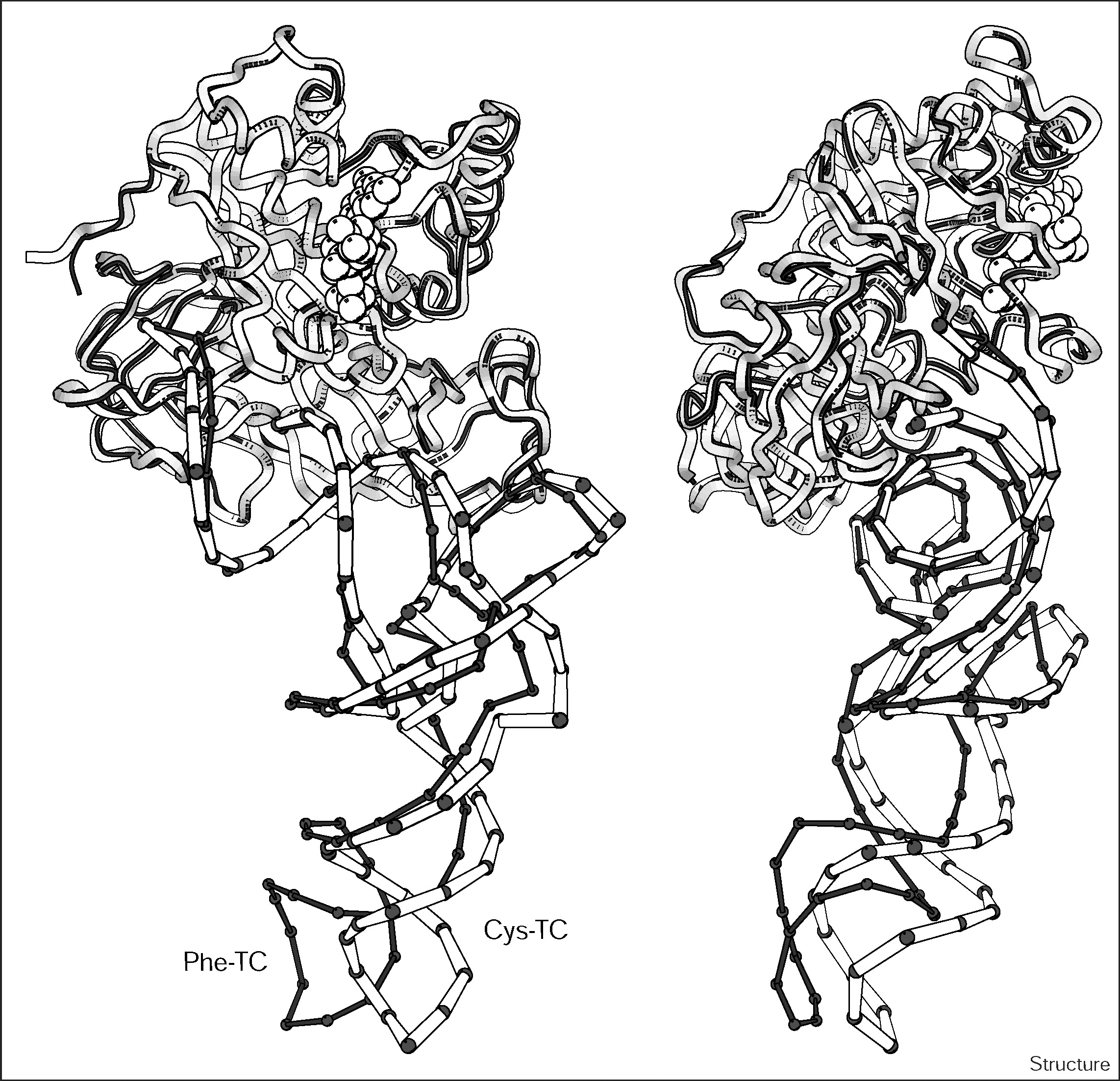 The Crystal Structure Of Cys Trnacys Ef Tu Gdpnp Reveals General And Specific Features In The