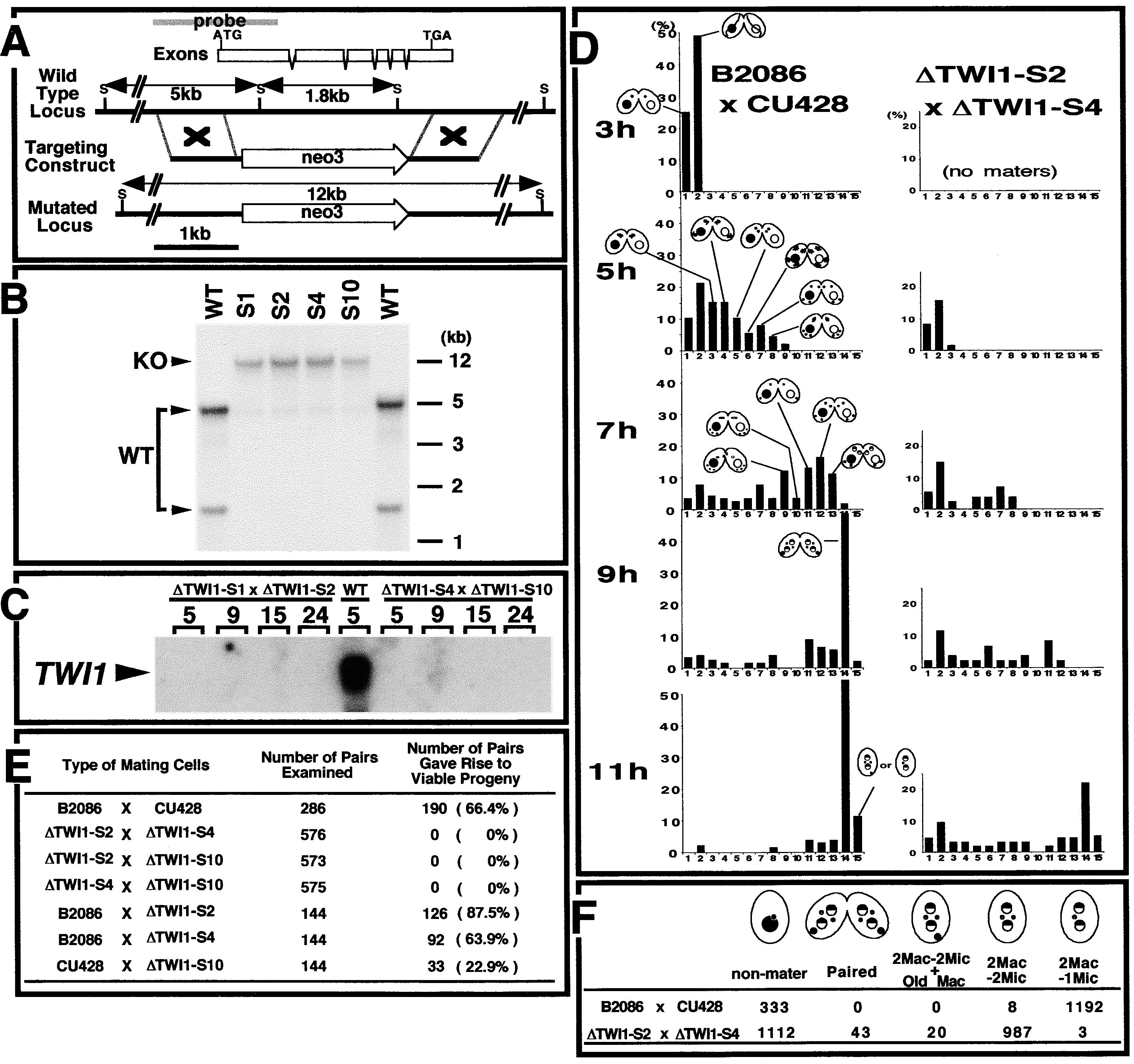 Ysis Of A Piwi Related Gene Implicates Small Rnas In