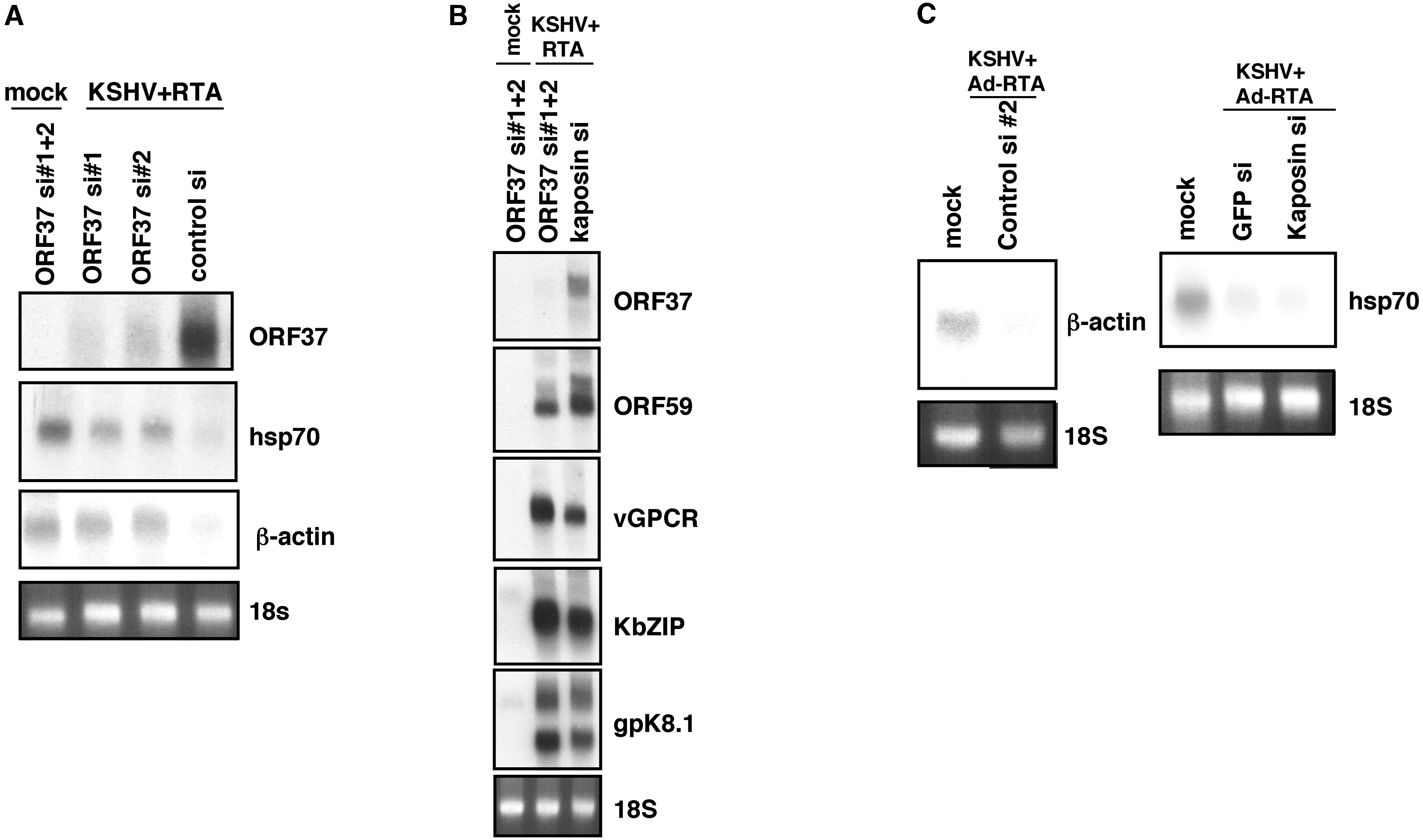 Lytic Kshv Infection Inhibits Host Gene Expression By