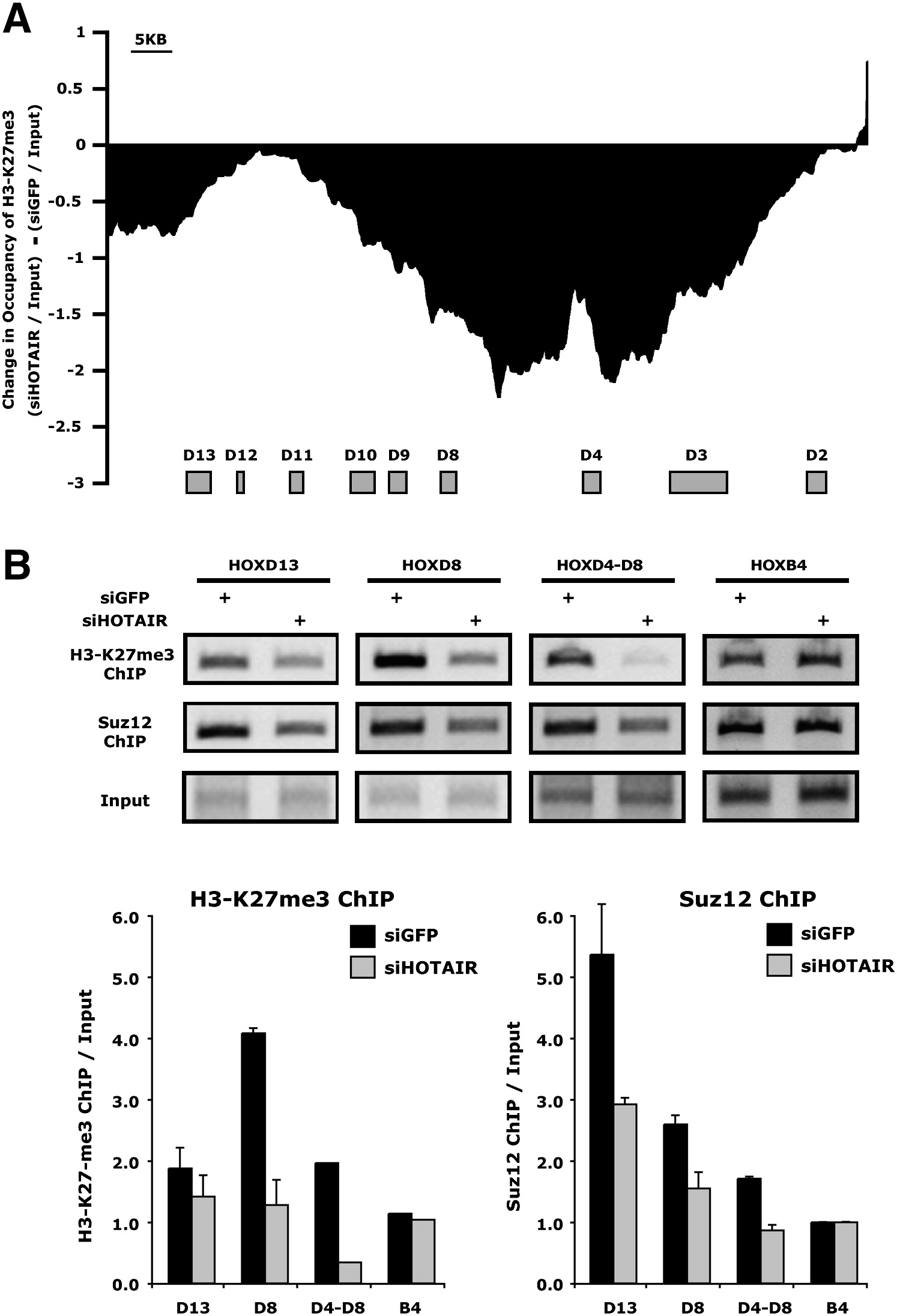 Functional Demarcation Of Active And Silent Chromatin