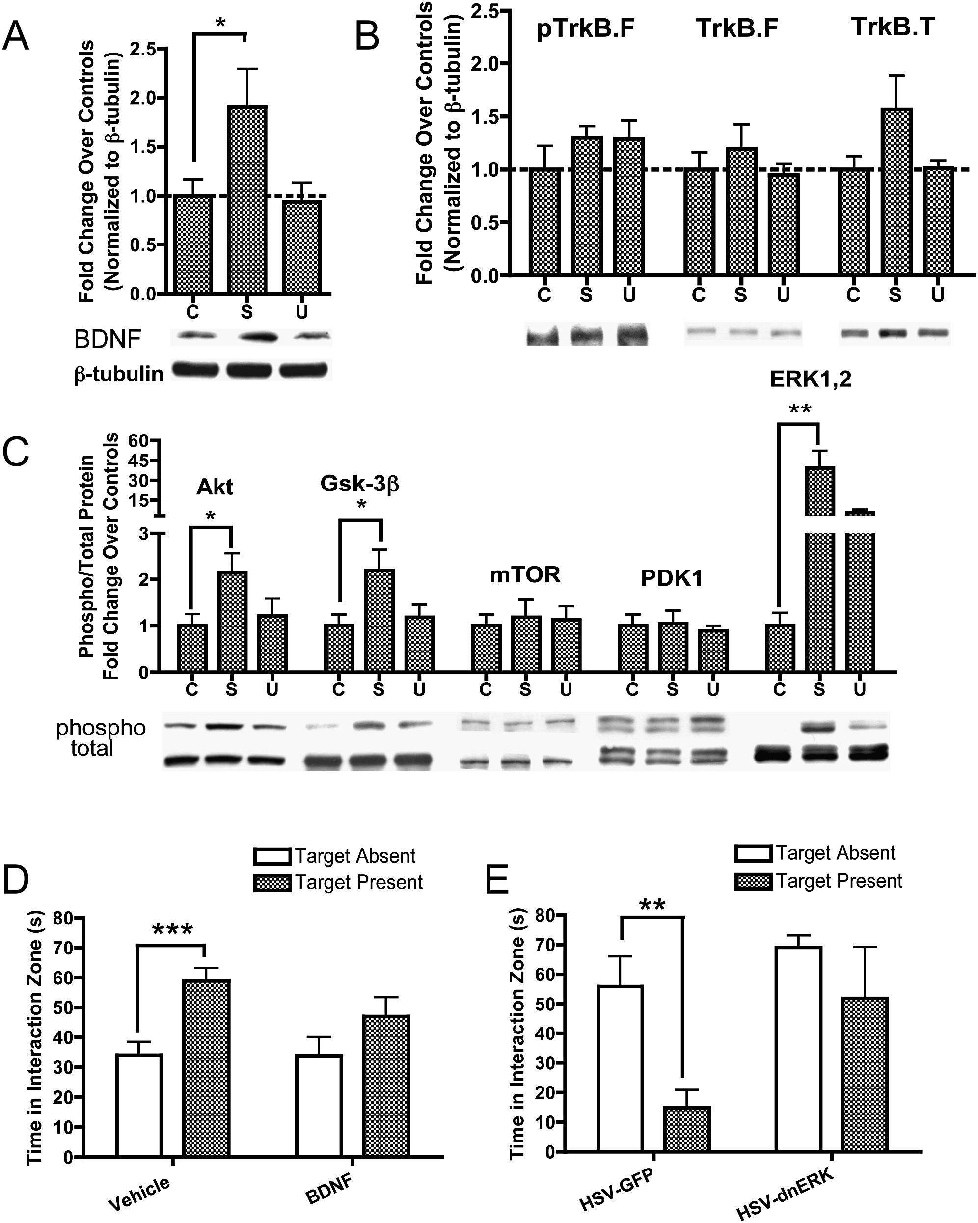 Molecular Adaptations Underlying Susceptibility And Resistance To Social Defeat In Brain Reward