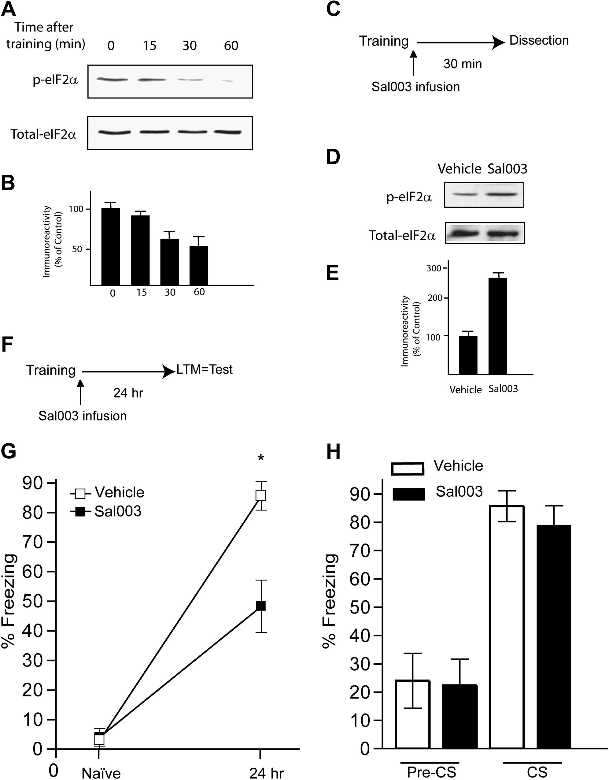 Eif2 Phosphorylation Bidirectionally Regulates The Switch