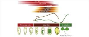LECs go crazy in embryo development: Trends in Plant Science