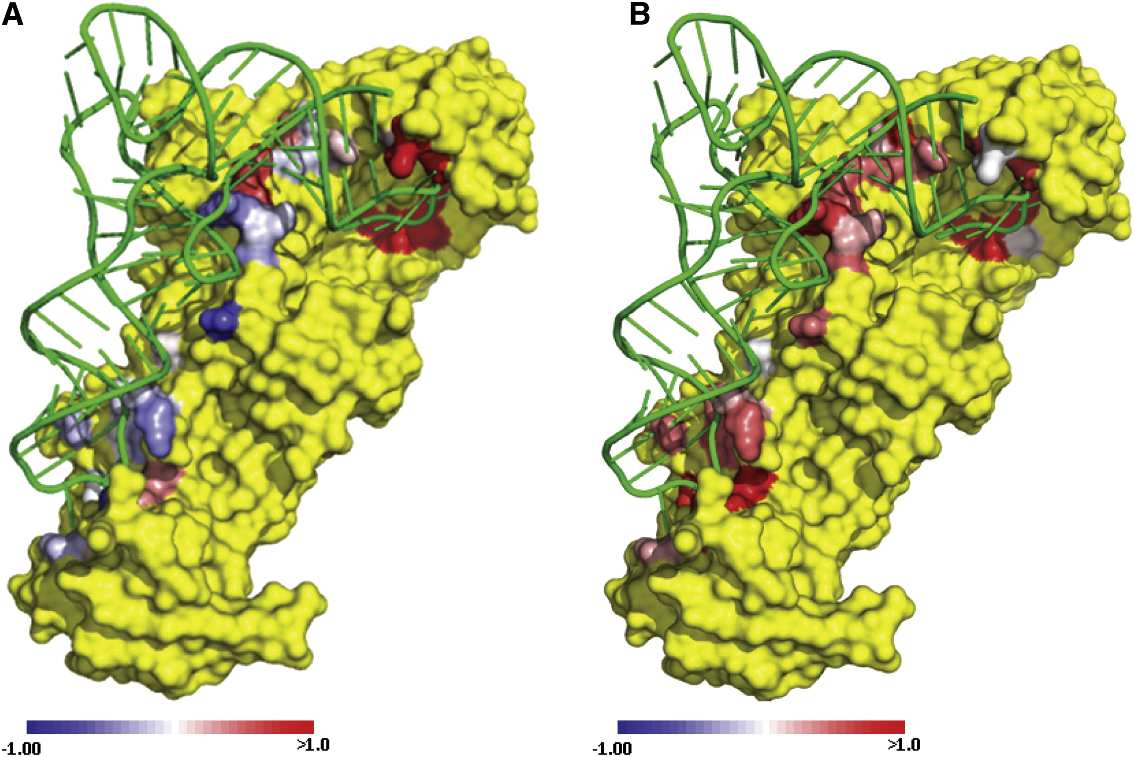 Heat Maps For Intramolecular Communication In An Rnp Enzyme Encoding Glutamine Structure