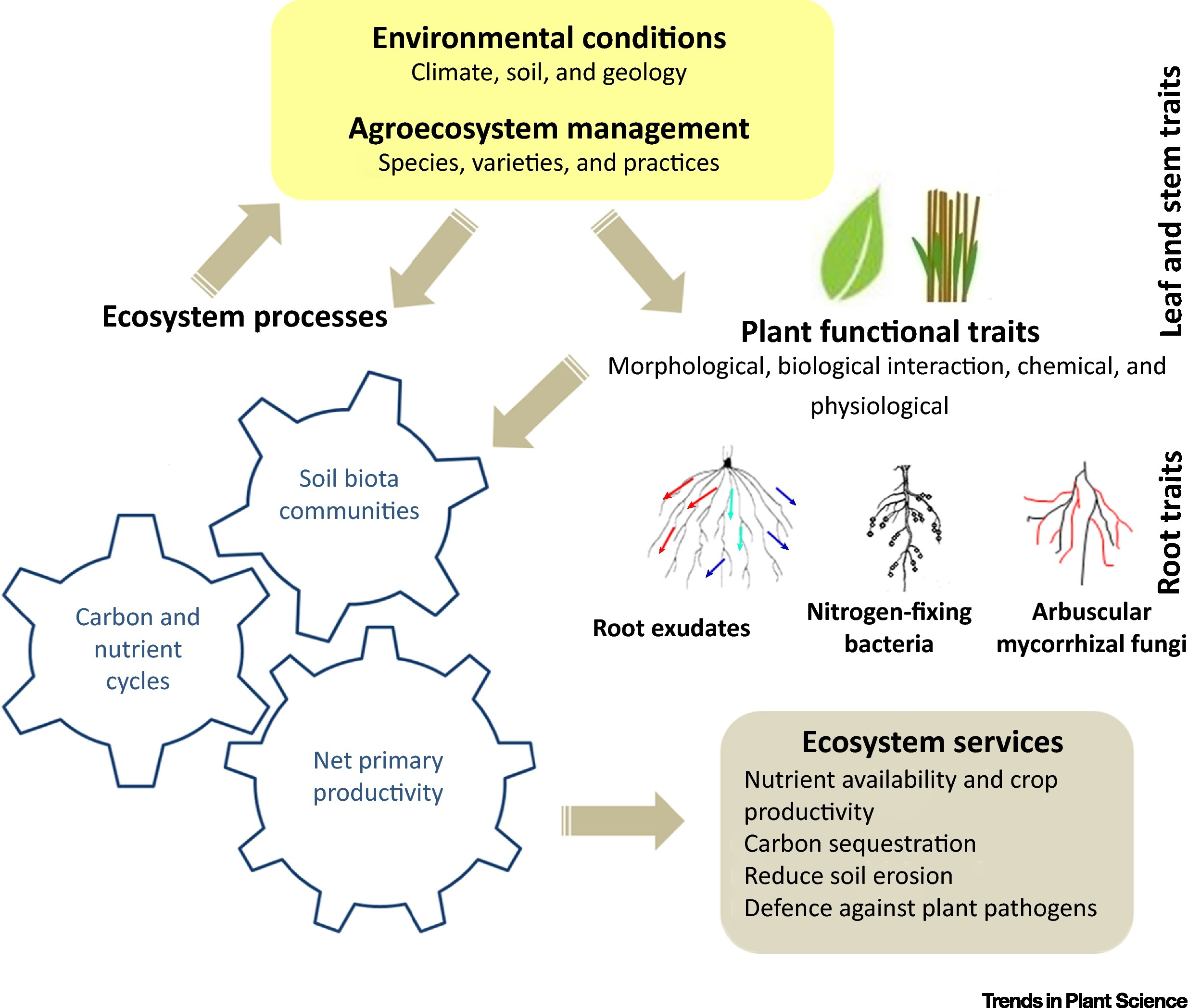 Plant Functional Traits Soil And Ecosystem Services