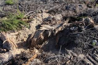 Destroçamento de cepos: um exemplo de boas práticas de gestão florestal