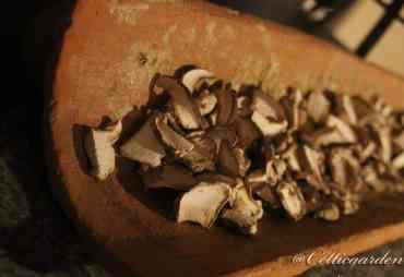 Pilze richtig trocknen