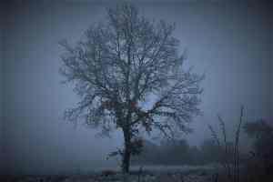 Mystische Eiche