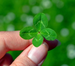 Ein vierblättriges Kleeblatt bringt Glück