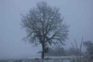 Ab Samhain bereitet sich Mutter Natur auf den Winter vor