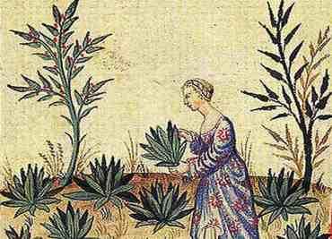 Kräutersammelkalender für den Monat Mai