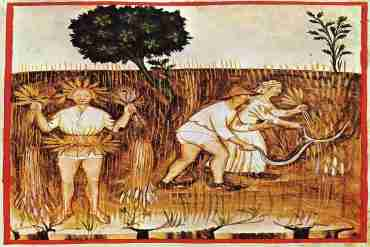 Kräutersammelkalender für den Monat August