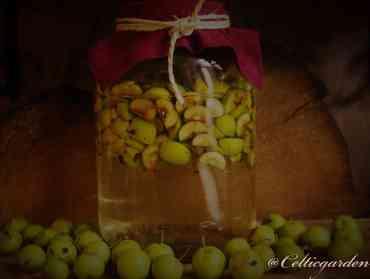 Apfelessig aus Holzäpfeln