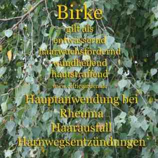 heilbaum_birkekl