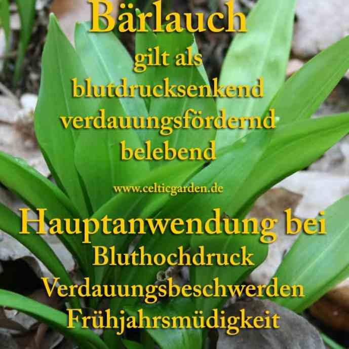 heilpflanze bärlauch