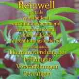 Steckbrief Beinwell