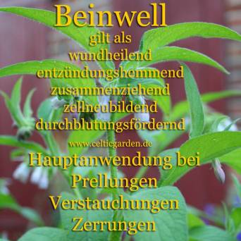 Steckbrief Beinwell