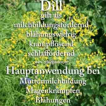 heilpflanze_dill