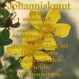 Steckbrief Johanniskraut