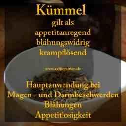 heilpflanze_kümmel