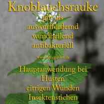 heilpflanze_knoblauchsrauke