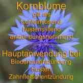 Steckbrief Kornblume