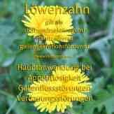 Steckbrief Löwenzahn