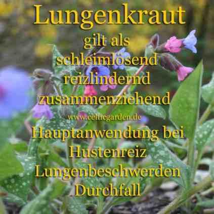 heilpflanze_lungenkrautkl