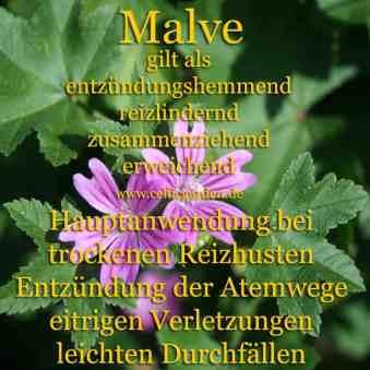 Steckbrief Wilde Malve