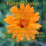 Steckbrief Ringelblume