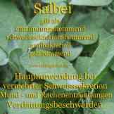 Steckbrief Salbei