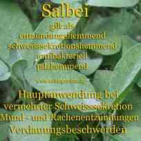 heilpflanze_salbei